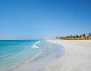 Oman mare